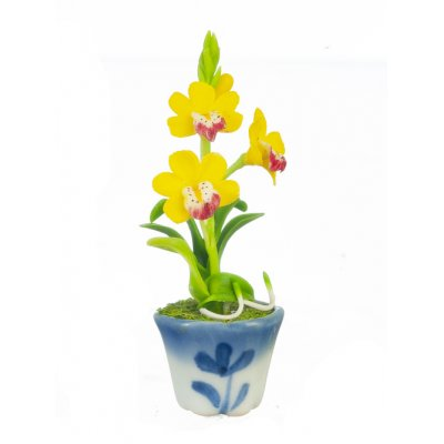 Cymbidium in Pot Yellow