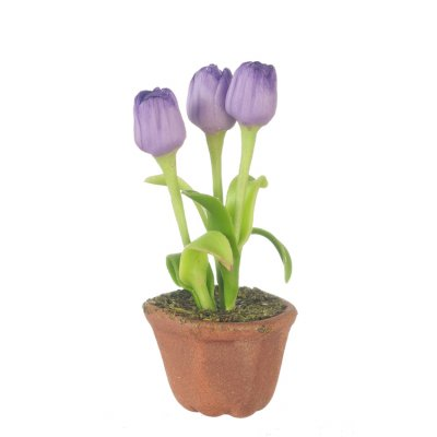 Potted Tulips - Purple