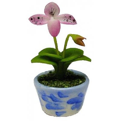 Pink Lady Slipper in Blue Pot