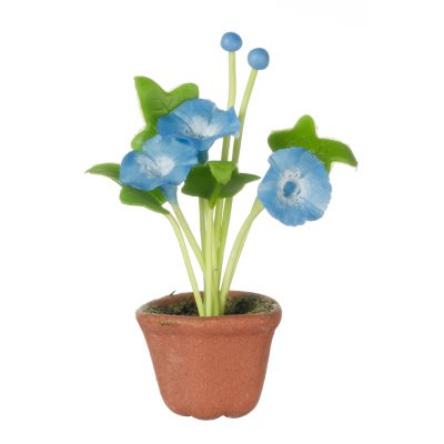 Potted Morning Glory - Bright Blue