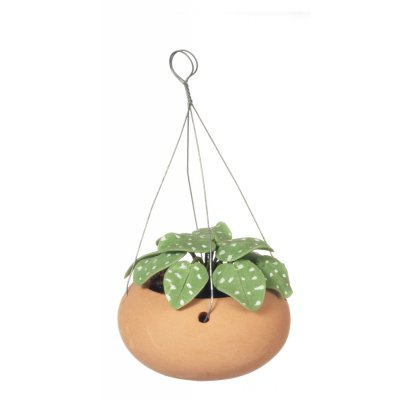 Green Hanging House Plant