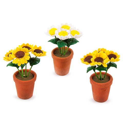 Potted Daisies - Assorted