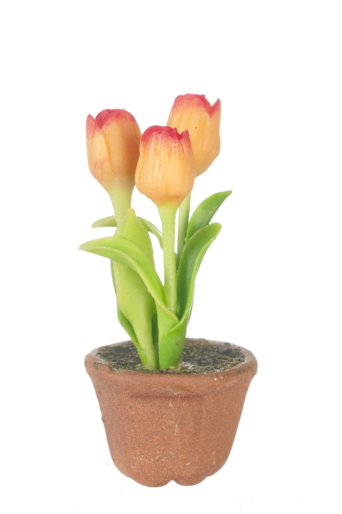 Potted Tulips - Pink