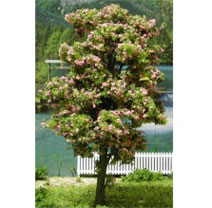 6 Inch Blossoming Tree 2pc