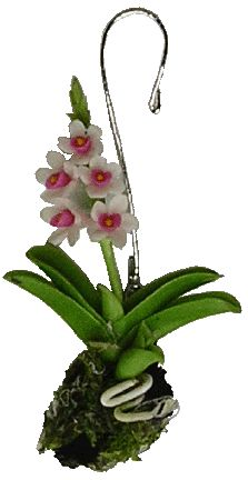 Hanging Pink and White Orchid