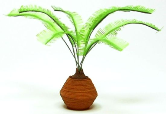 Sago Palm in Clay Pot