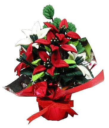 Red and White Poinsettias in Foil