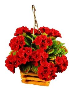 Red Geraniums in Hanging Planter