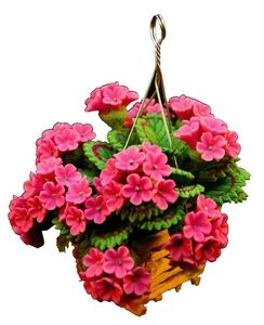 Pink Geraniums in Hanging Planter