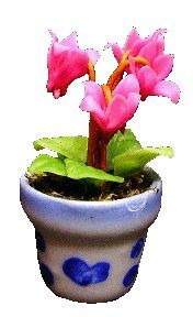Pink Fushia in Blue Pot