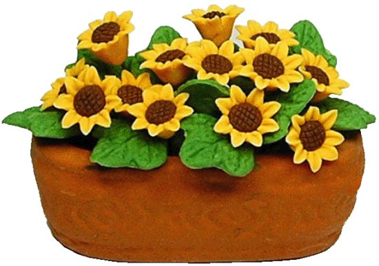 Sunflowers in Clay Planter