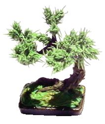 Detailed Bonsai Tree